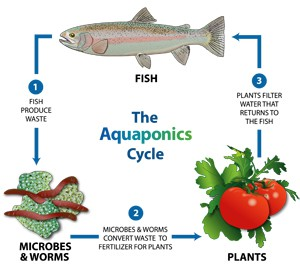 new.aquaponics-icon.jpg